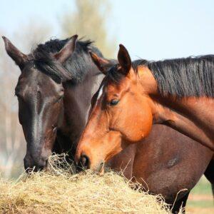 Køb Nordic Harmoni hos www.hesteviden.dk - levering på faste vareture over hele vest- og midtsjælland