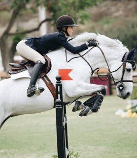 10 grunde til din hest ikke fungerer. Hesteviden.dk blog