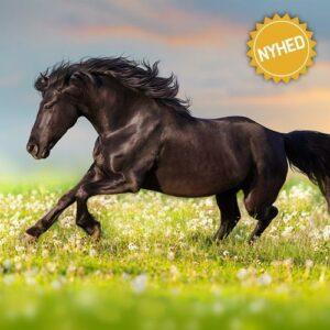 Køb på www.hesteviden.dk