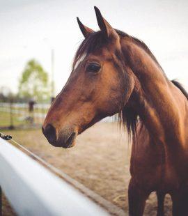 Få styr på dit hestebudget - Hesteviden.dk blog